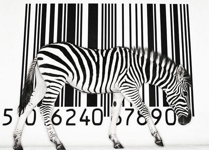 20_zebra